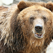 What You Need To Know About Recessions And Bear Markets